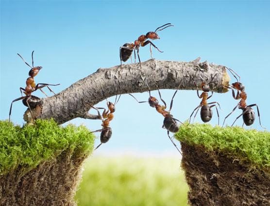 hormigas-escritorio